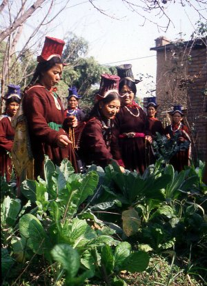 Training Nepali women in permaculture gardening techniques