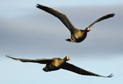 Birds often migrate incredible distances