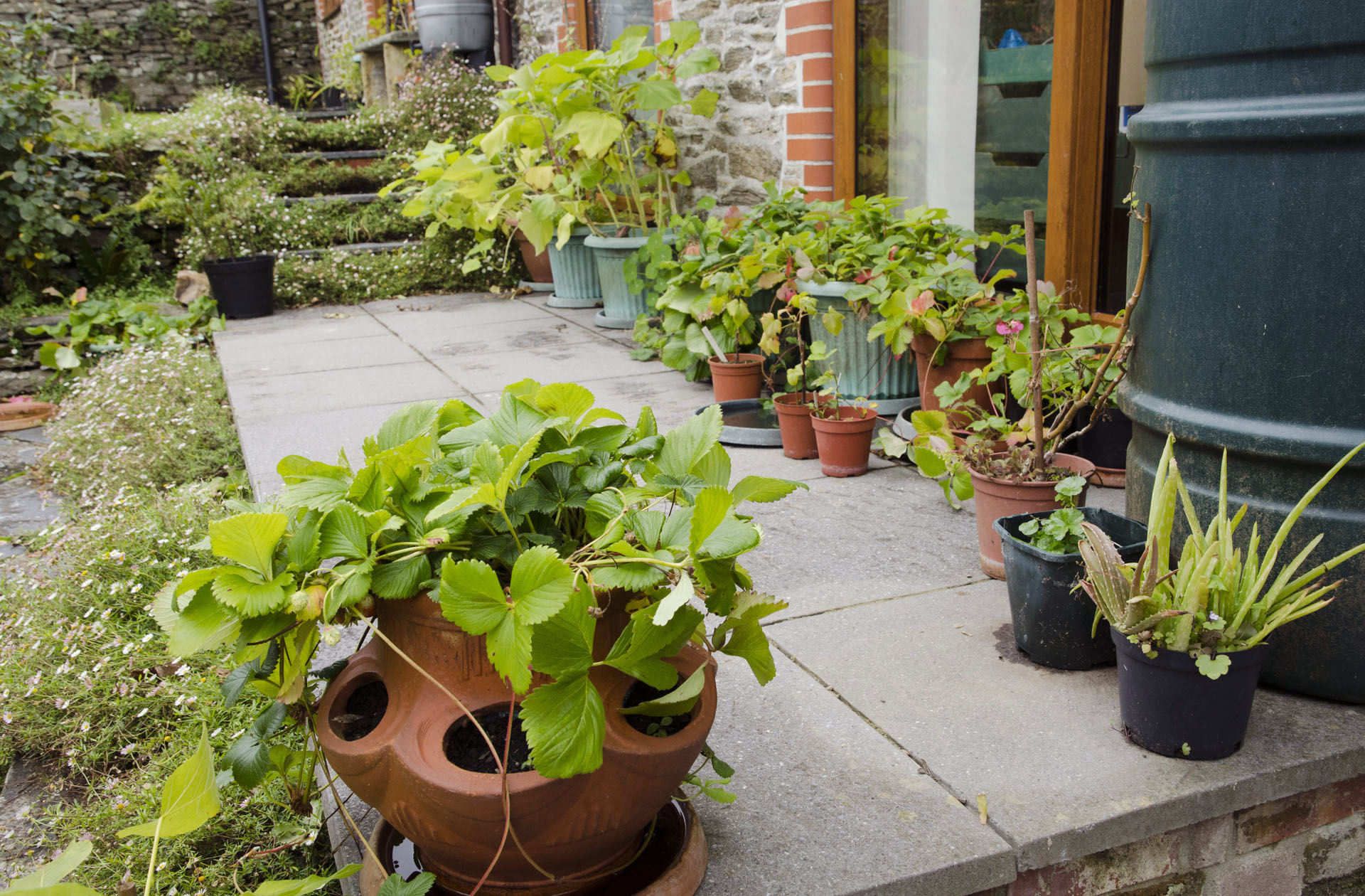 Plants on patio