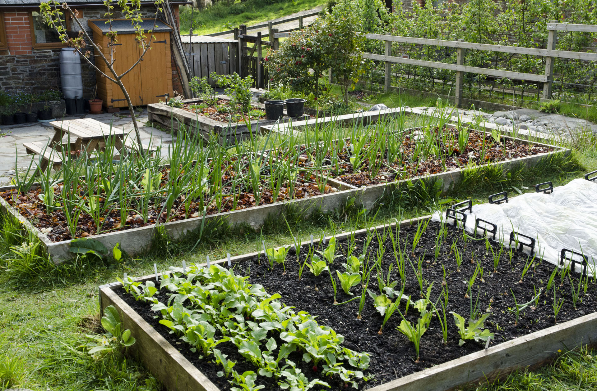 Vegetable beds in courtyard