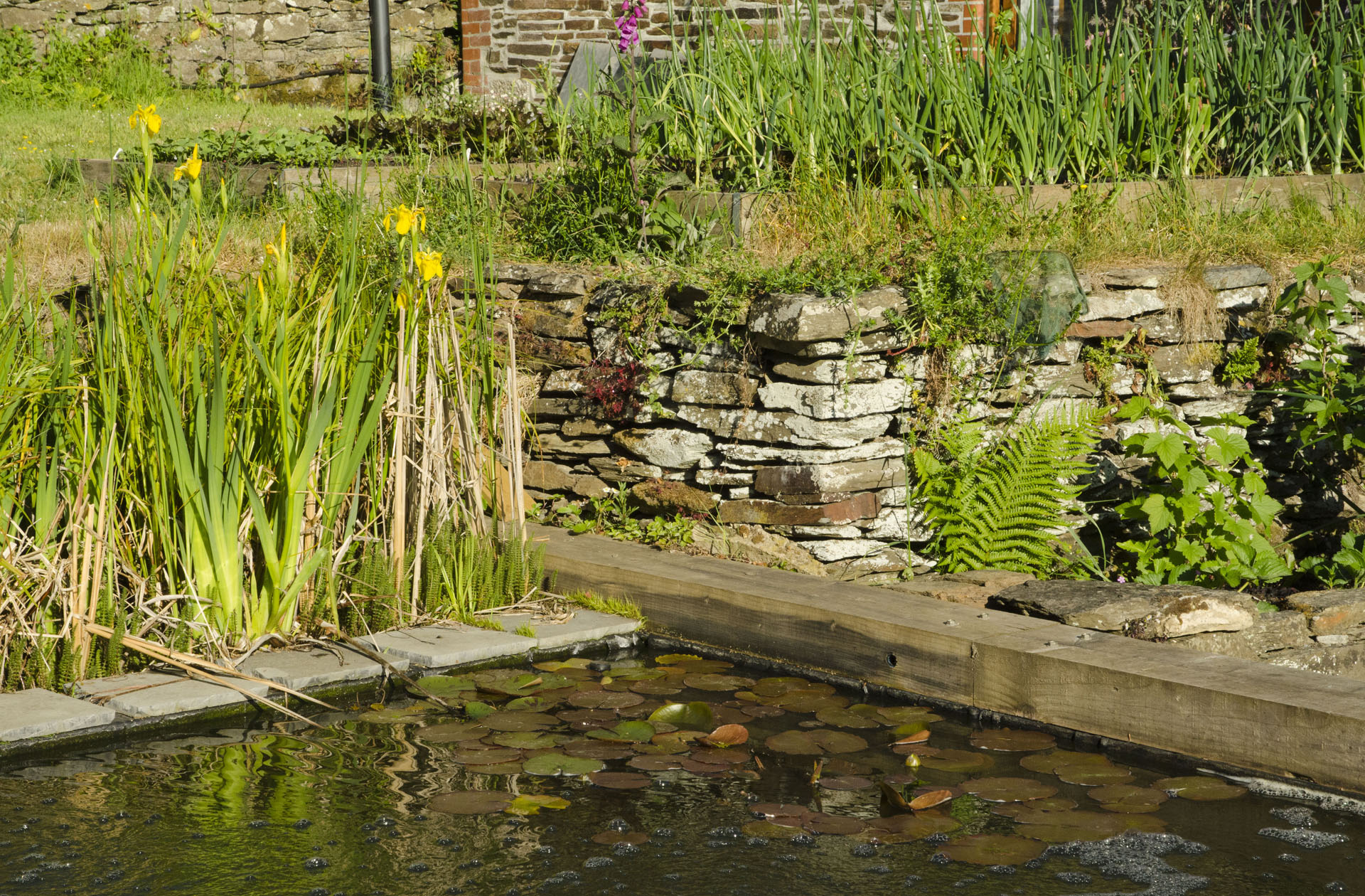 Drystone wall and pond
